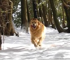 dog running through snowcovered forest